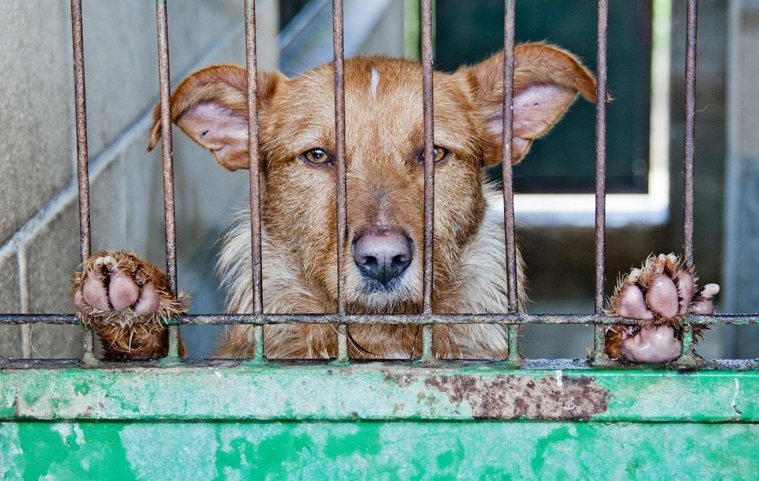 Pelz-Recherche für eine Schweizer Tierschutzorganisaion